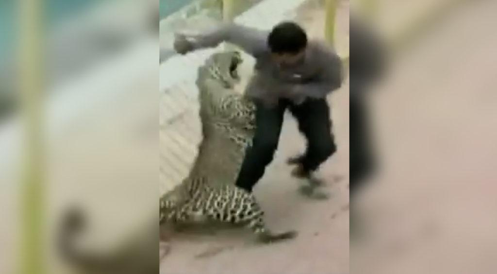 Leopardo escapa en escuela