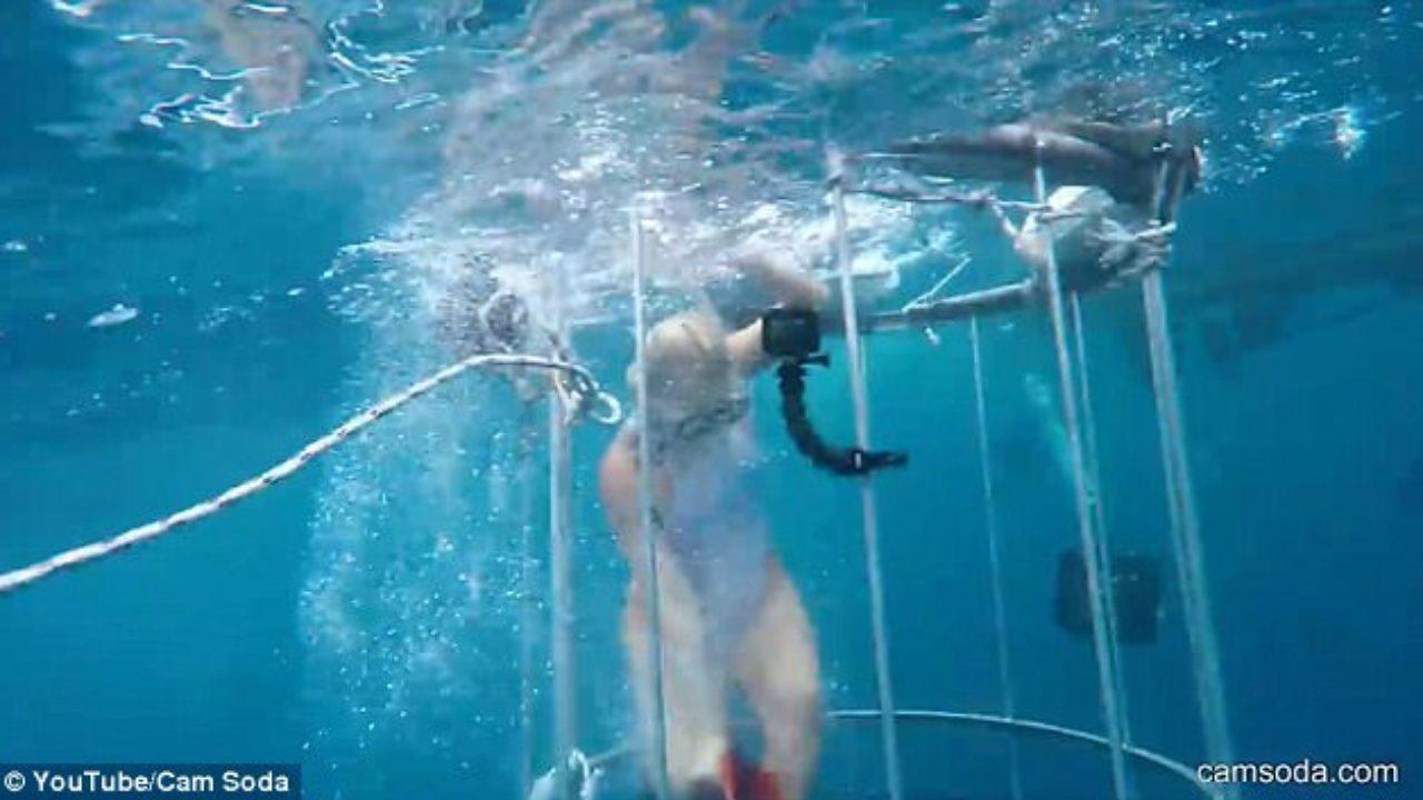 Actriz Porno Es Mordida Por Tiburon video] estrella porno es mordida por tiburón durante