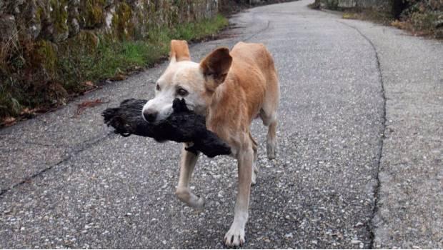 Volvió por su cachorro que murió en el incendio de Galicia