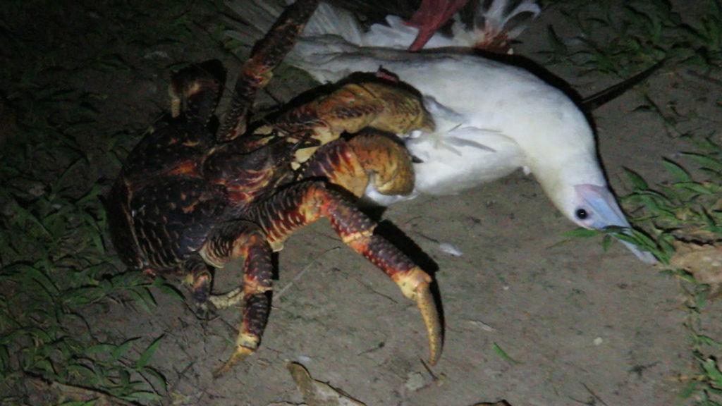VIDEO capta inusual ataque de un cangrejo hacía una gaviota en EU