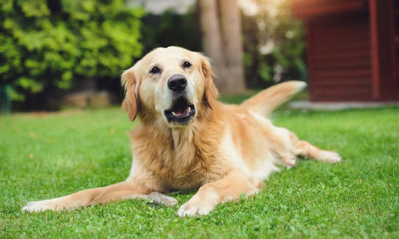 El tener un perro puede alargar tu vida, según estudio
