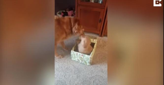 Perro recibe un 'hermanito' de Navidad y así reaccionó