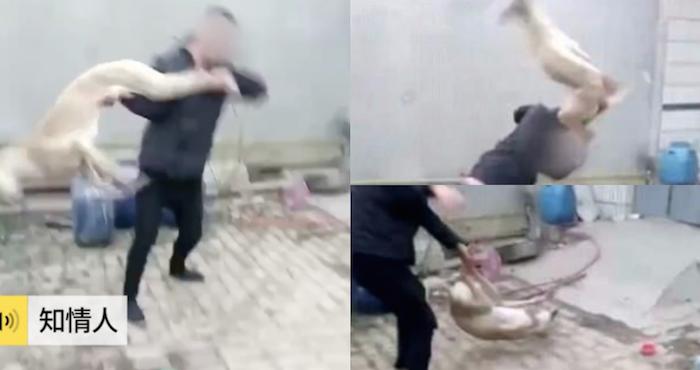 Hombre azota a su galgo contra el suelo cuando perdió una carrera