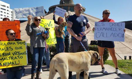 El Cuerpo Diplomatico, lleva a cabo una protesta para decir no al maltrato animal.