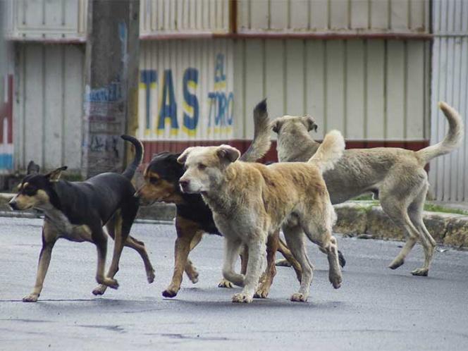 Sancionaran en Edomex a quien alimente perros callejeros y no los adopte