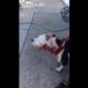 cara a un perro