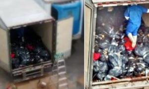 Jalisco, cuerpos, forense, tráiler