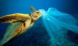 Tortuga, plástico, contaminación