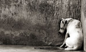 Perros, Indonesia, ONG