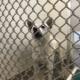 perro, abuso sexual, USA
