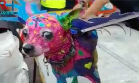 alebrije, perro, Yucatán