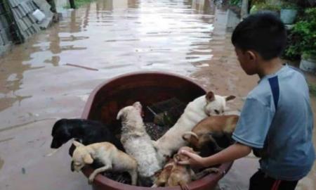 Nayarit, inundación, Willa