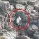 focas, acantilado, Reino Unido