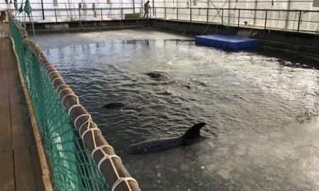 medio ambiente, ballenas, Rusia