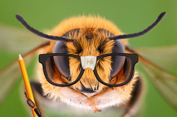 abejas, medio ambiente, estudio
