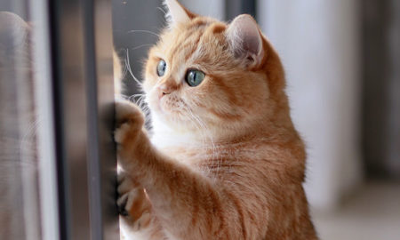 gato, escapa