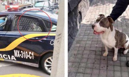 policia, perro, rescate, dinero