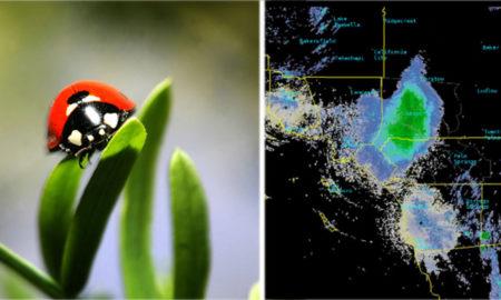 meteorología, servicio meteorológico, san diego, california, insectos