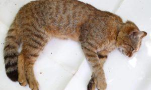 animales, descubrimientos, ciencia, biología, gatos, francia