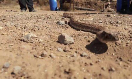 Ensenada, Protección Civil, animales, serpientes, víboras