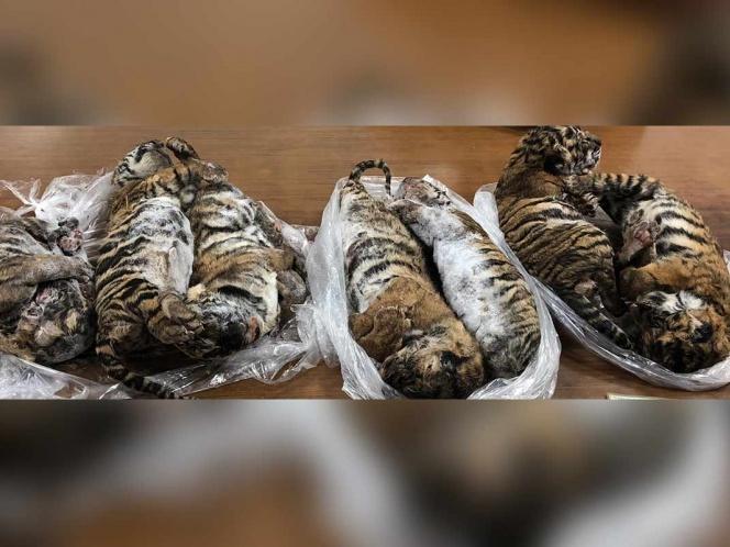 tigres, bebes, auto