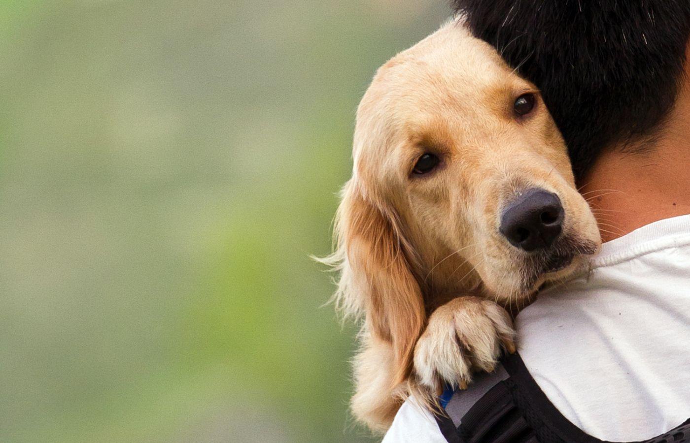 multas, mascota, abandono