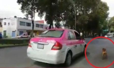perrito, taxista, cdmx