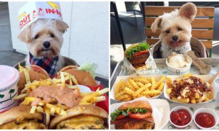 perros, animales, adopta, mascotas, instagram