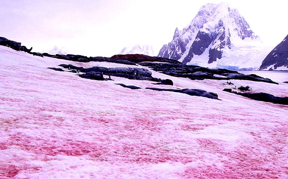 viral, california, nieve, fenómeno, montañas