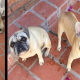 viral, perros, animales, mascotas, Twitter, redes sociales