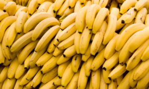 plátano, agricultura, cosecha, colombia, hongo, contagio