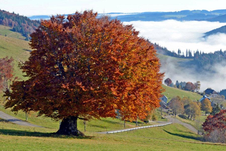 árboles, Europa, peligro de extinción, medio ambiente