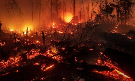 incendios, Indonesia, forestales, medio ambiente