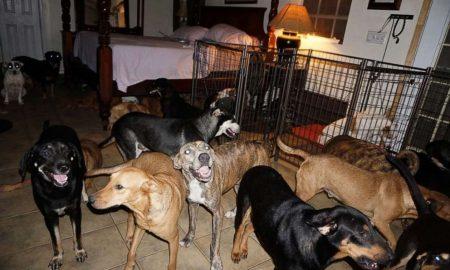 dorian, bahamas, perros, huracán
