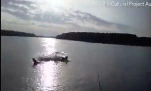cocodrilo, perro, ataque, rio