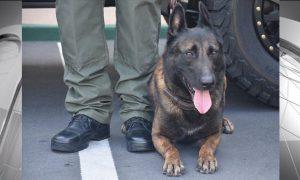 San Diego, perro, policía, apuñala, California