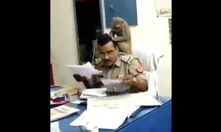 mono, chango, animales, India, policía, video, viral