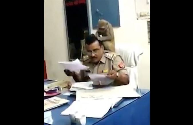mono, chango, animales, India, policía, video, viral
