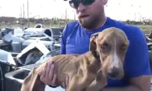 perro, animales, huracán, Dorian, EEUU, Bahamas