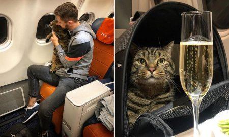animales, curiosidades, aerolínea, gato, Rusia