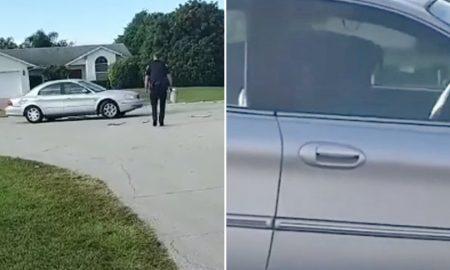 vehículo, perro, animales, video, viral, coche, Florida