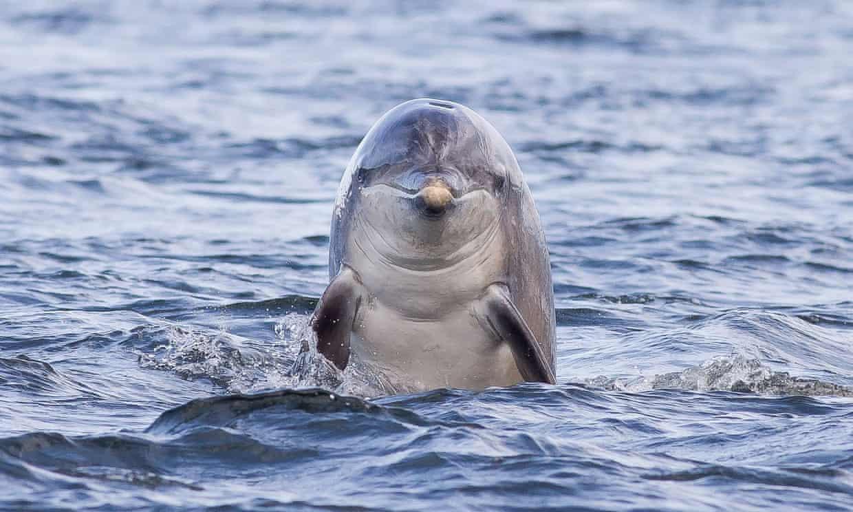 delfines diestros