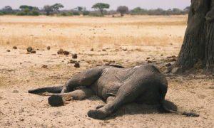 elefantes, Zimbabue, sequía, animales, peligro de extinción