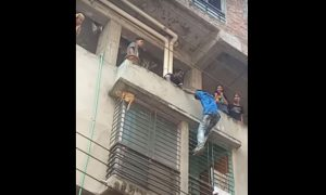 gato, edificio, rescate, animales, video, viral