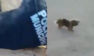policia, sinaloa, perrito, perro, rescate