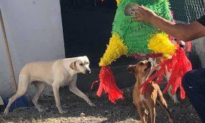 perros, albergue, posada, Tamaulipas, Matamoros
