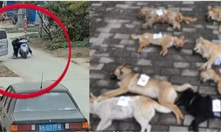China; violencia animal