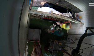 maltrato animal, maltrato animal en España, matadero