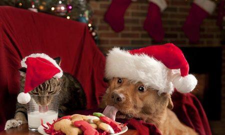 mascotas; festividades