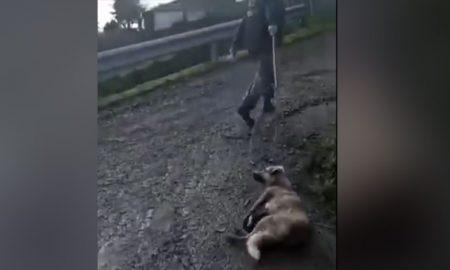 maltrato animal, mascota, maltrato animal en España